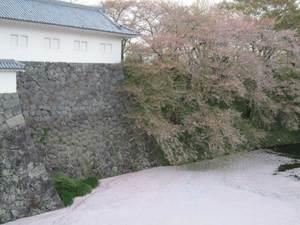 Haru201105043_2
