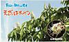 Hachimitsu201205042