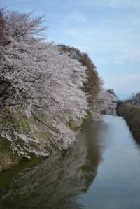 Sakura20131