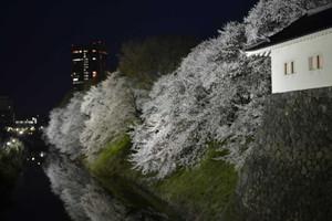Sakura20132