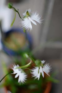 Flower2013082