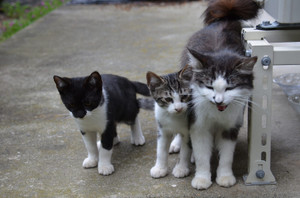 Cat5family