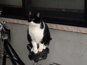 Cat20162