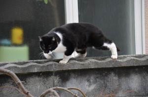 Cat20167