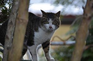 Cat20168